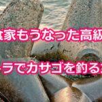 高級魚のカサゴはテトラの穴釣りで爆釣間違いなし!美味を独り占め!